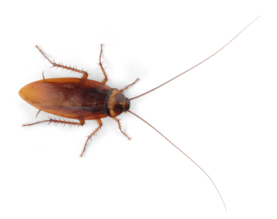 Bug Identification Allied Termite And Pest Control