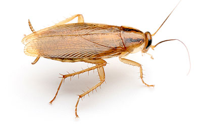 Bug Identification - ALLIED Termite and Pest Control